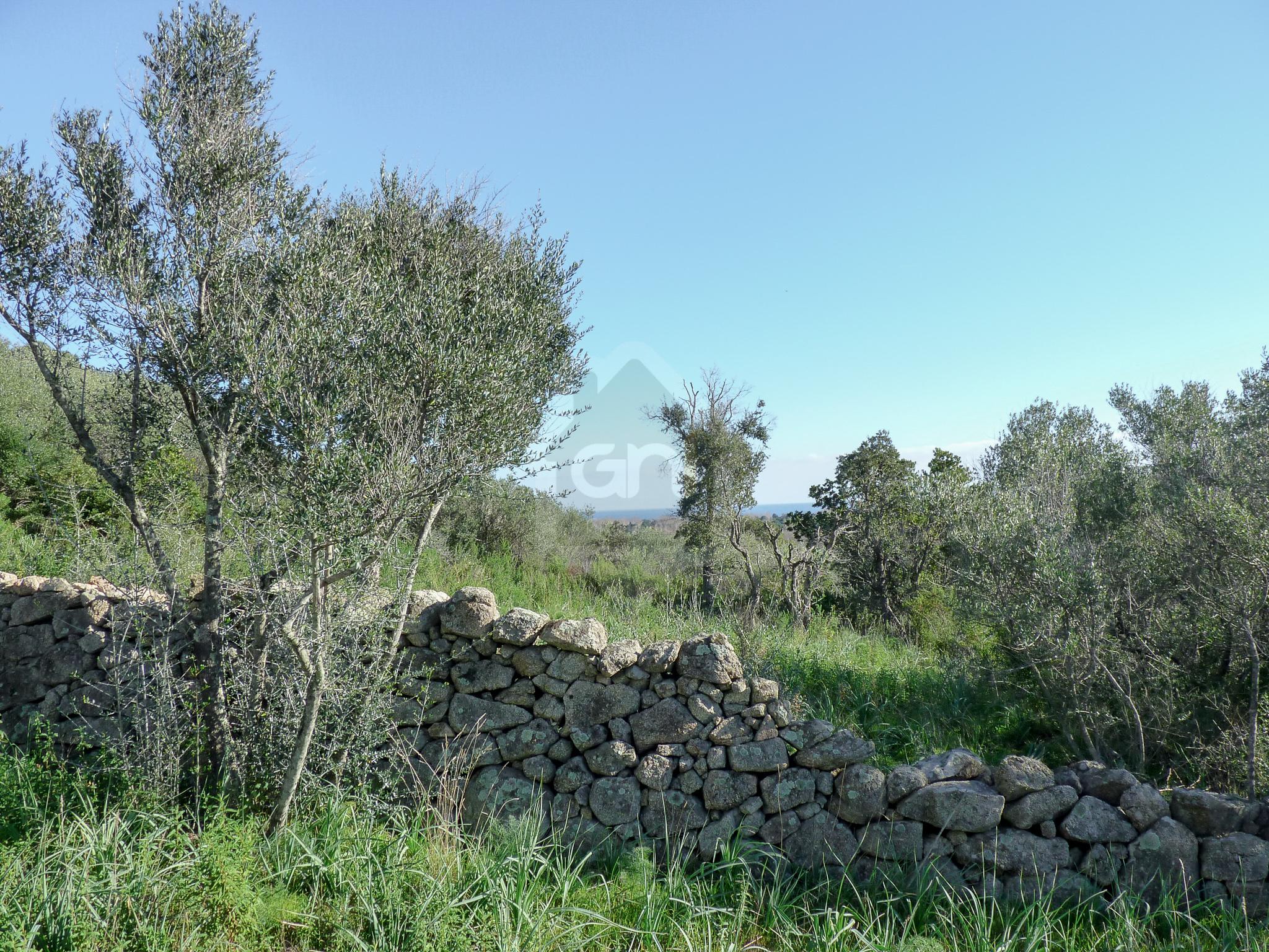 Terrain proche Fautea à Sainte Lucie de Porto Vecchio