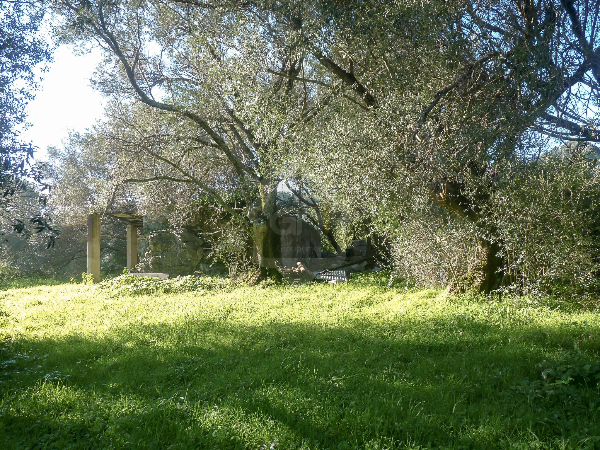 Terrain viabilisé à Sotta